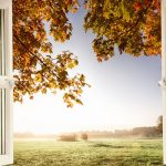 The Best Windows For Your Home